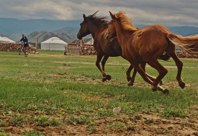 Horseschasingharganat