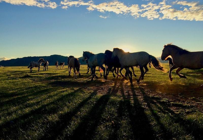 Horsesrunningevening